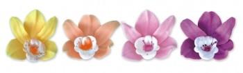 Orhideed värvilised mix 12 tk