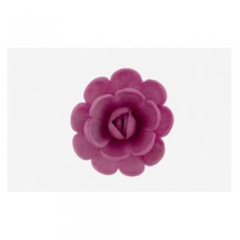 Inglise roos lilla 5tk