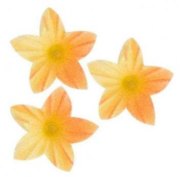 Vahvlililled mini Kollased, oranži varjundiga 50tk